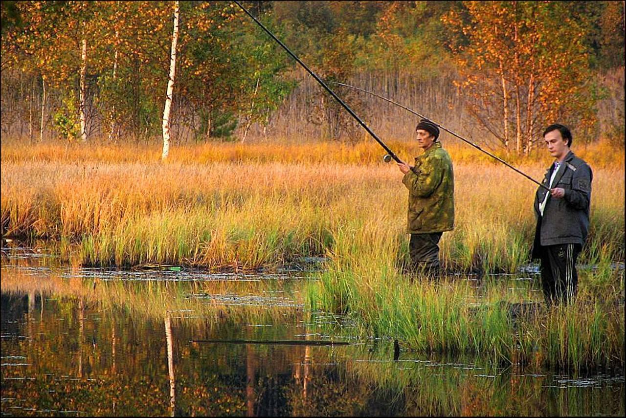 Как и на что ловить сазана осенью?
