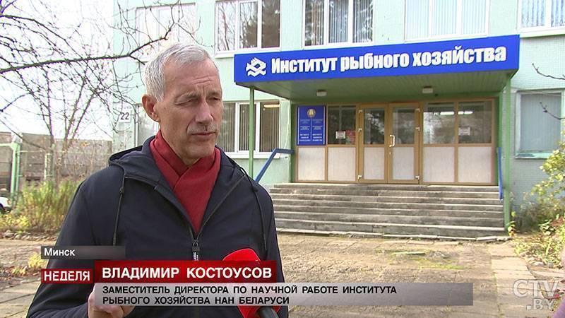 Новости: почему белорусская рыба не уступает норвежской, и как зарыбляют водоёмы в стране?