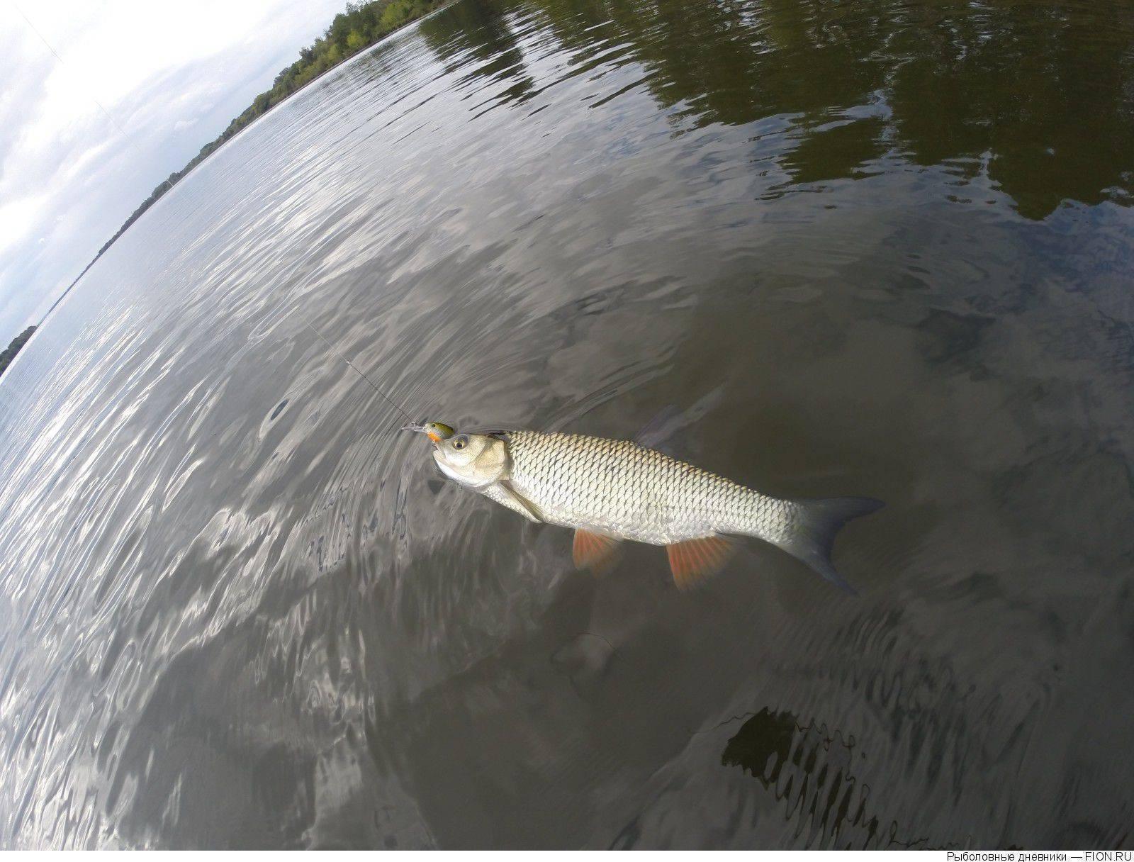 Рыбачим на оке: обзор уловистых мест и особенности рыбалки