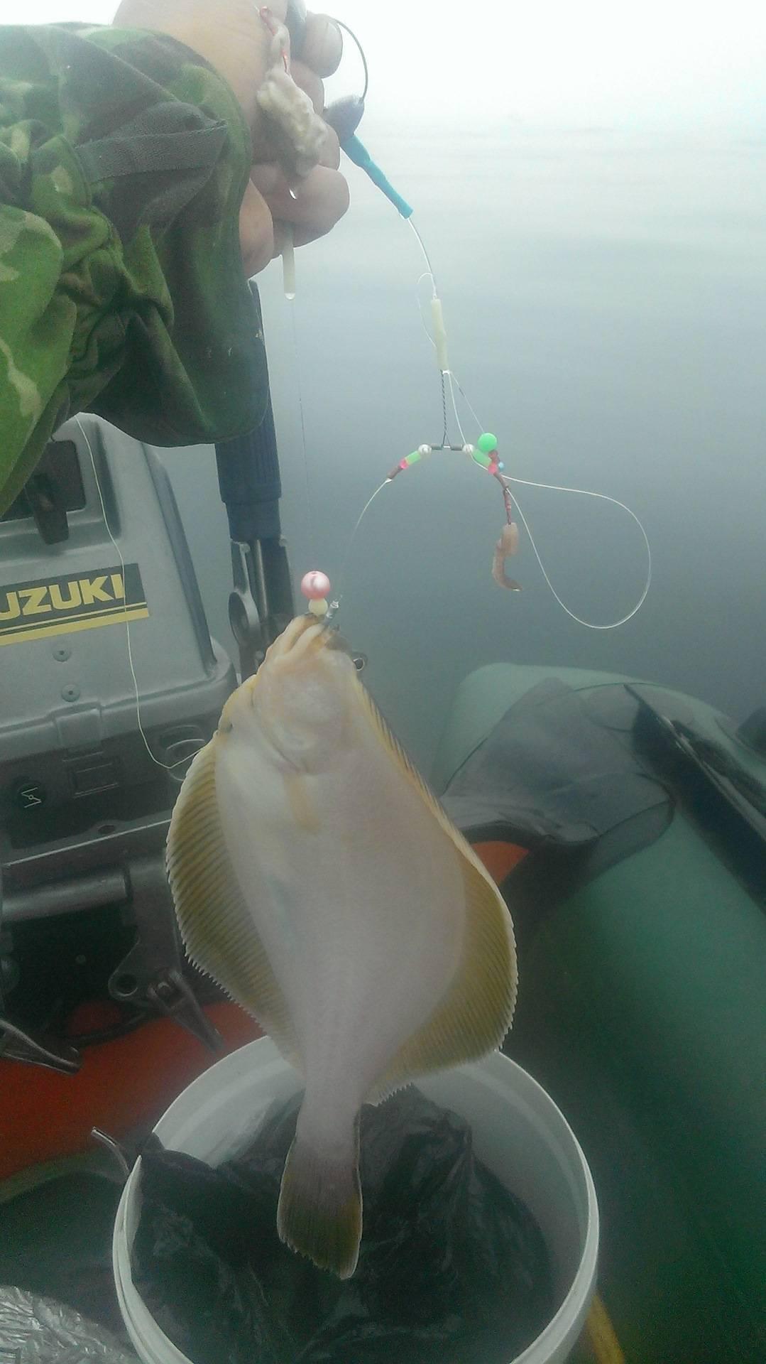 Рыба камбала?: фото и описание. как выглядит камбала?, и какая это рыба морская или речная?