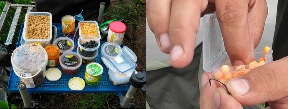 Ловить карпа летом: советы и рекомендации