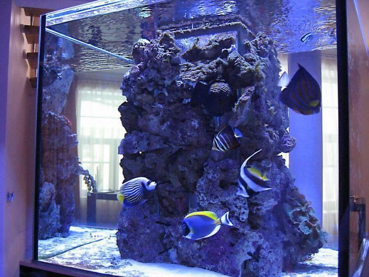 Морской аквариум в домашних условиях: с чего начать, оборудование, запуск, уход, содержание, виды, рыбки, растения, кораллы, самп