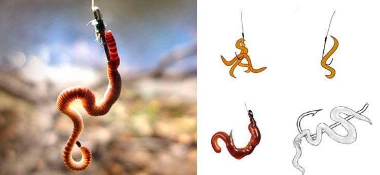 Как насадить червя на крючок: способы, правила, рекомендации