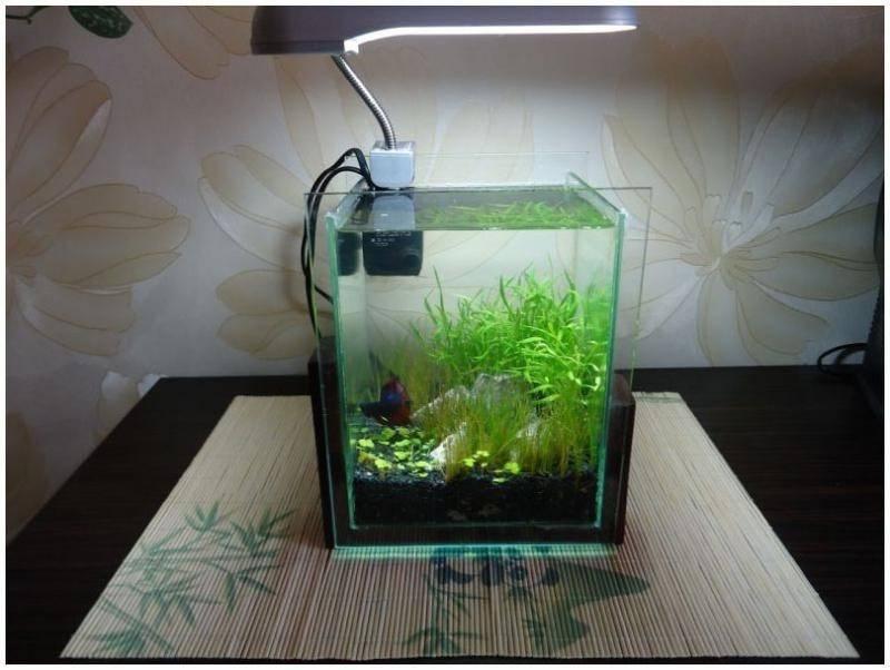 Маленький аквариум (мини, небольшой, 5, 10 литров): рыбки, как ухаживать, с одной рыбкой, оформление, дизайн, растения, уход, лампа, обогреватель