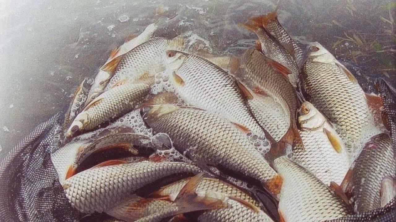 В чем разница между вяленой и сушеной рыбой?   в чем разница