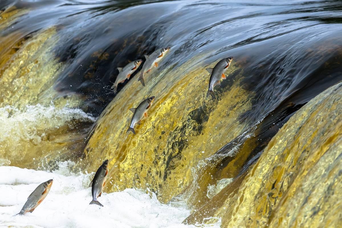 Среда обитания морского чёрта и интересные факты о нем