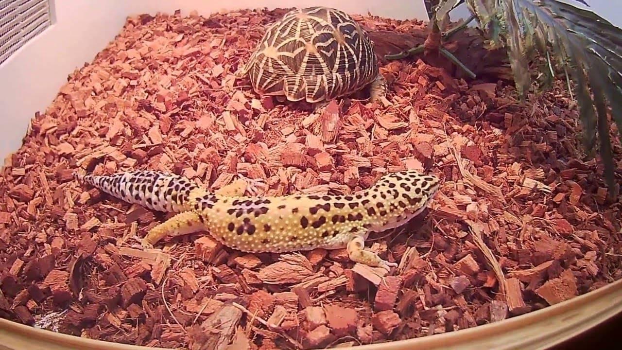 Ящерицы – стоит ли заводить такого питомца дома?