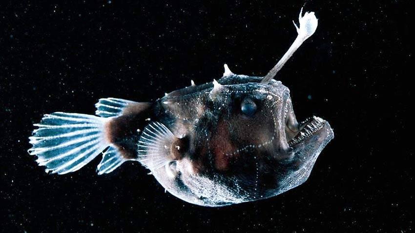10 самых жутких глубоководных тварей (22 фото)