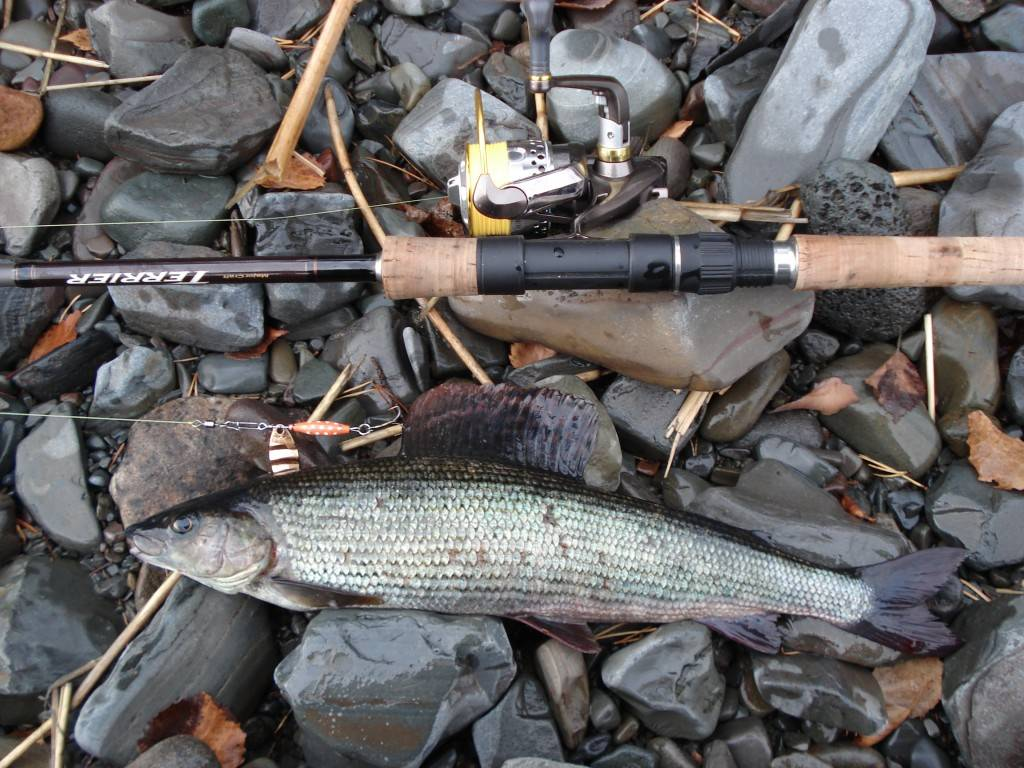 Рыбалка в кирове и кировской области: в советске и на большой горе, другие рыболовные места. как рыбачить на реке вятка?