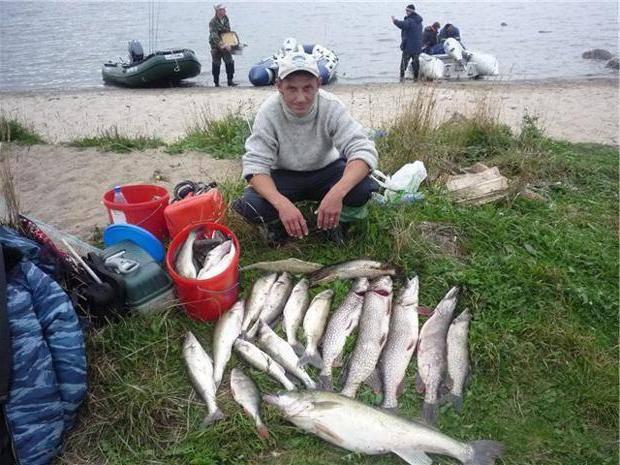 Рыбалка в брестской области: видовое разнообразие рыбы, платные и бесплатные водоёмы, особенности рыбной ловли