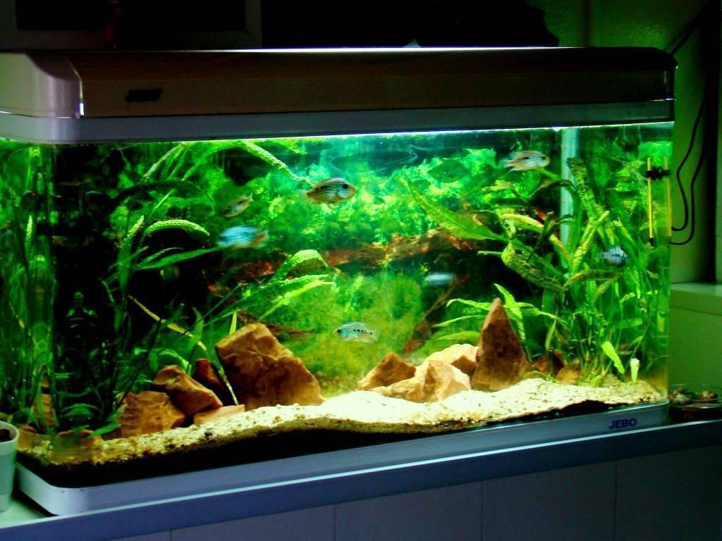 Грунт для аквариума: виды, какой лучше, как выбрать, необходимые требования и размеры