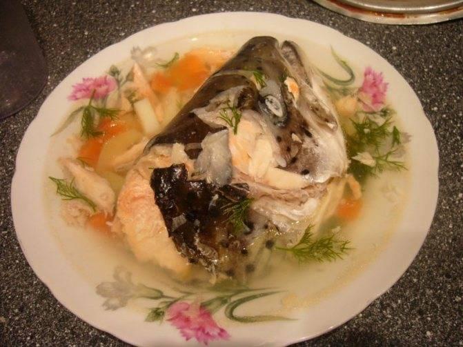 Из какой рыбы самая вкусная уха. какая самая вкусная рыба для ухи, жарки - лечение