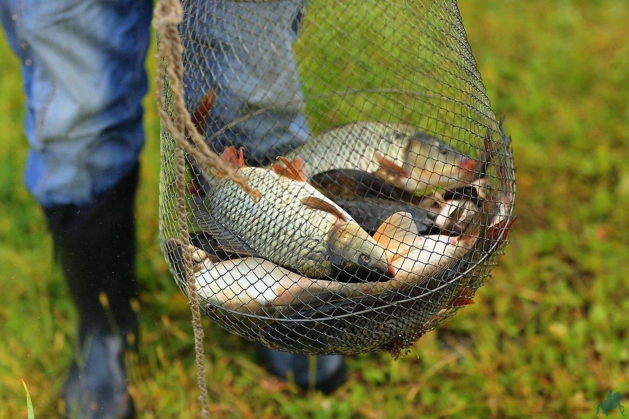 Томь. рыбалка на хариуса на поплавочную удочку.