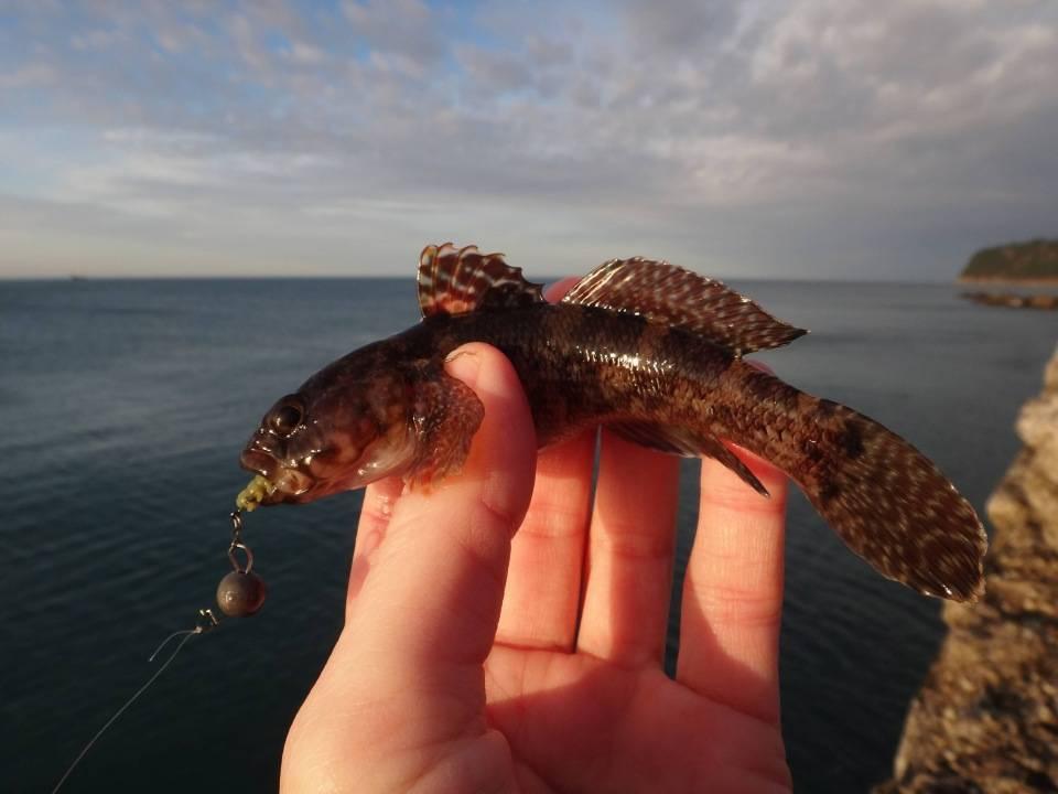 Рыба хамса - 115 фото и практическое руководство по ловле рыбы своими руками