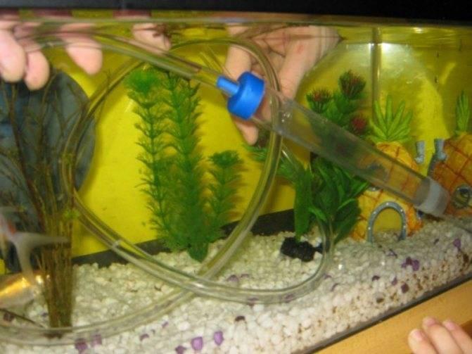Разберемся раз и навсегда как правильно в аквариуме сифонить грунт