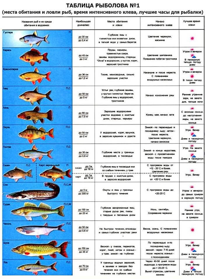 Знак зодиака рыбы: особенности личности и совместимость