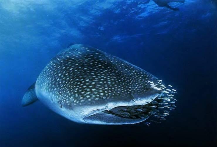 Самые большие рыбы в мире: фото самые большие рыбы в мире: фото