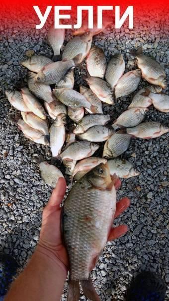 Рыбалка на карпа в челябинской области