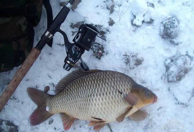 Рыбалка на карпа зимой