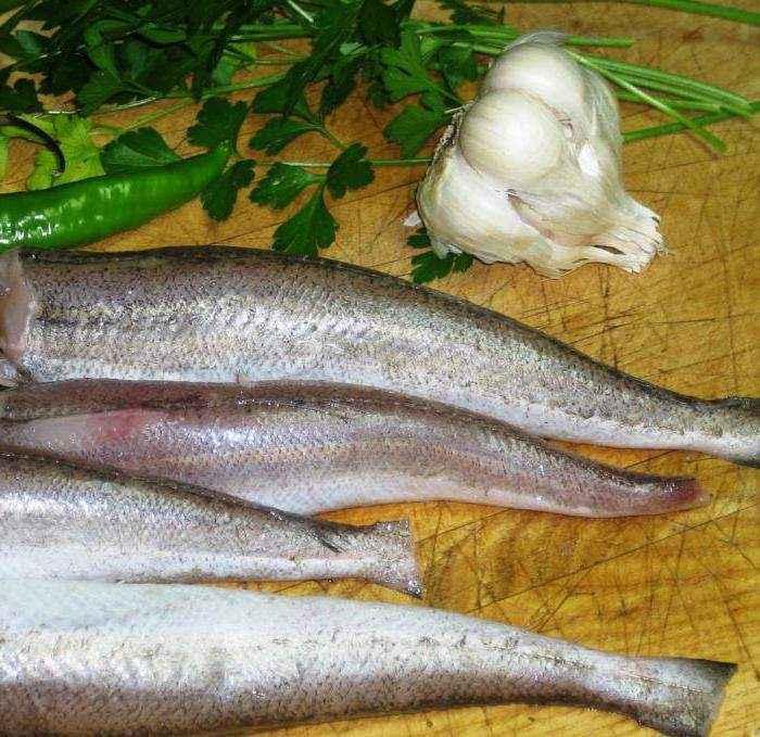 Рыба тарпон атлантический: специфические особенности
