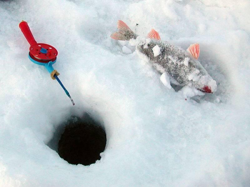 Что нужно для зимней рыбалки – список необходимого