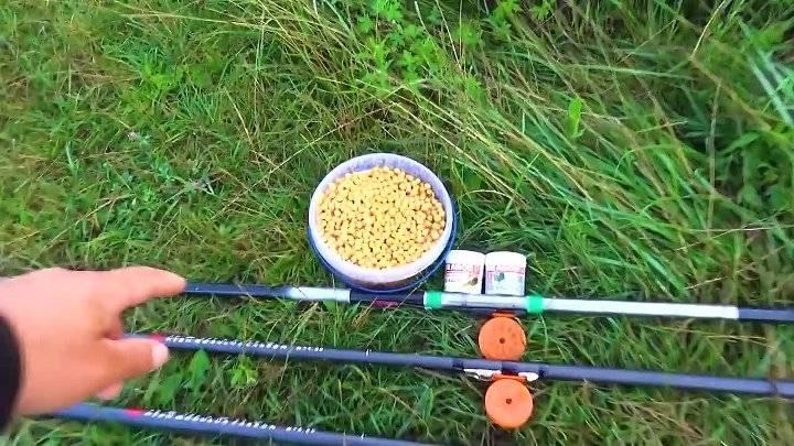 Ловля на боковой кивок осенью: все от оснащения до проводки
