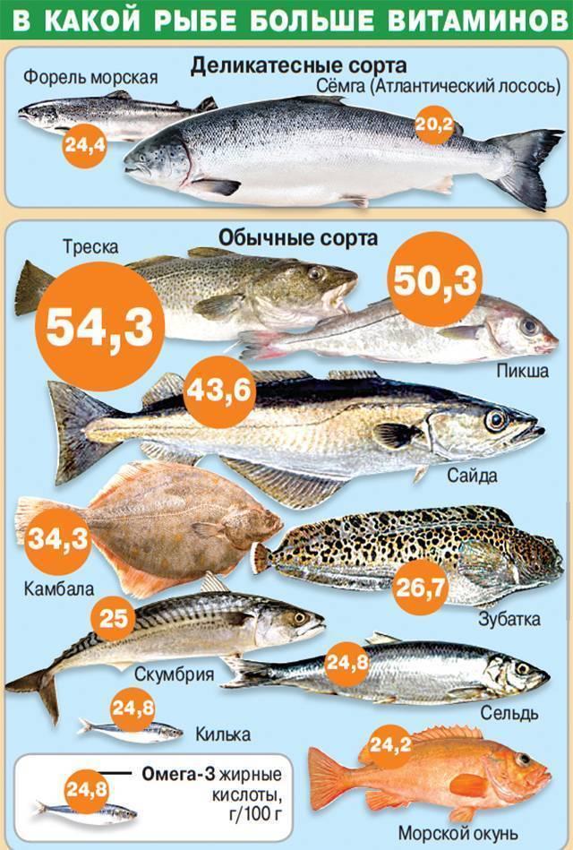 Рыба навага — чем полезна и чем вредна | польза и вред