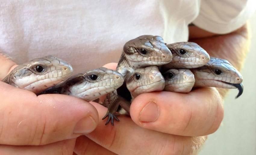 Кого из рептилий можно держать дома. Принципы ухода