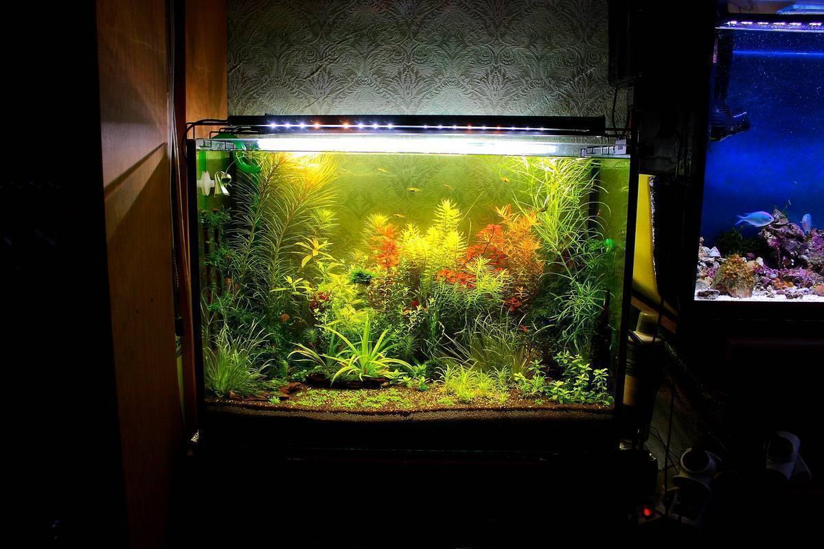 Лучшие лампы для аквариума 2020 | рейтинг по отзывам владельцев