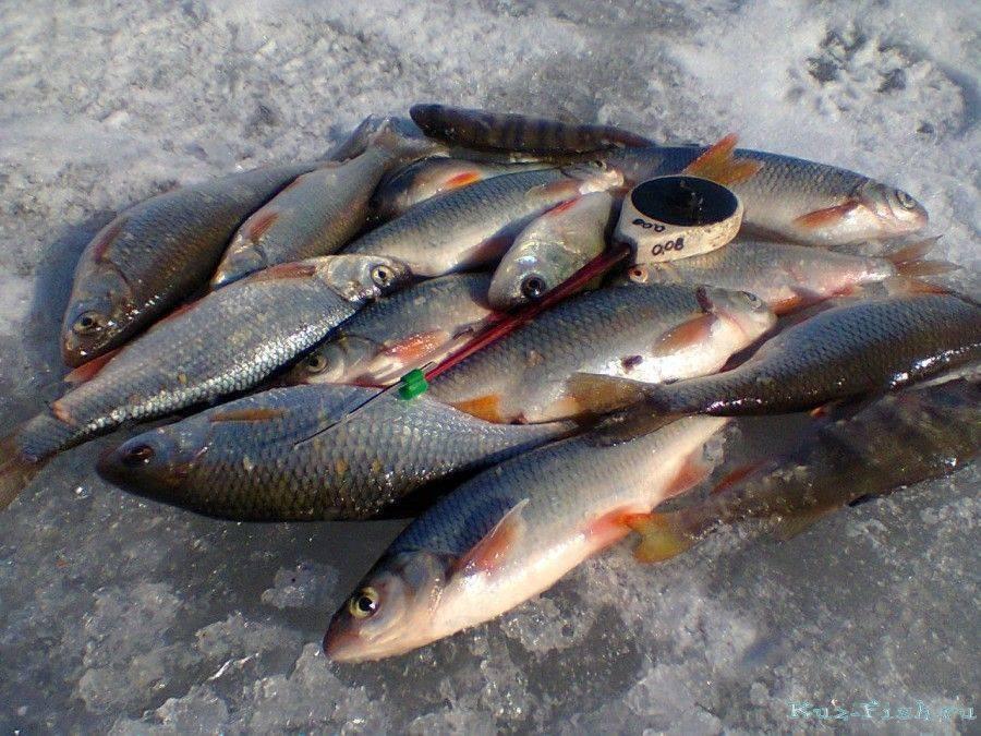 Белое озеро в вологодской области. рыба в белом озере, отдых и рыбалка, погода и прогноз клева, фото, как добраться
