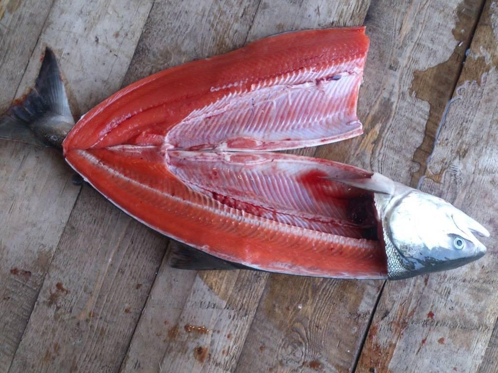 Рыба кета польза и вред - неталкоголю