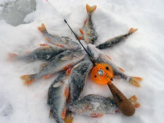Ловля окуня на безмотылку зимой