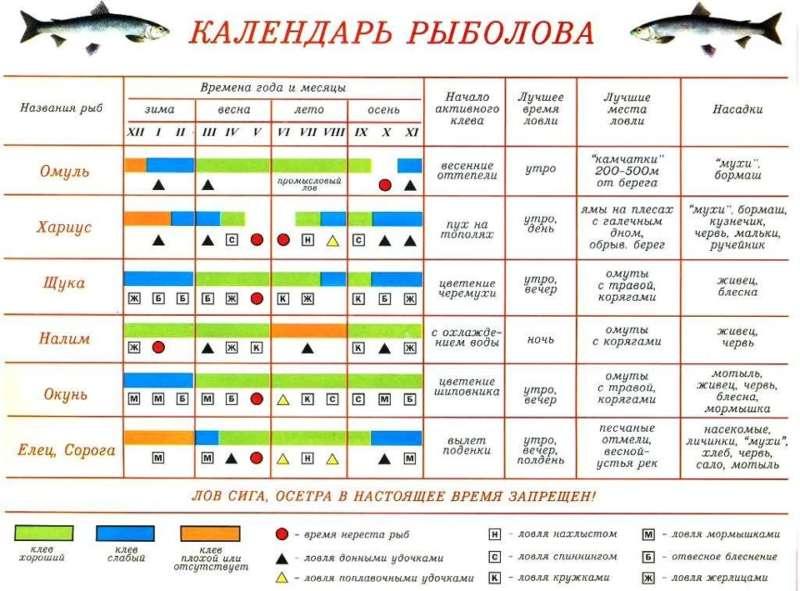 Прогноз клева рыбы на пять дней. календарь рыболова