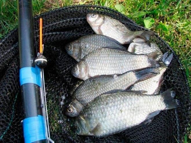 Рыбалка на карася в сентябре