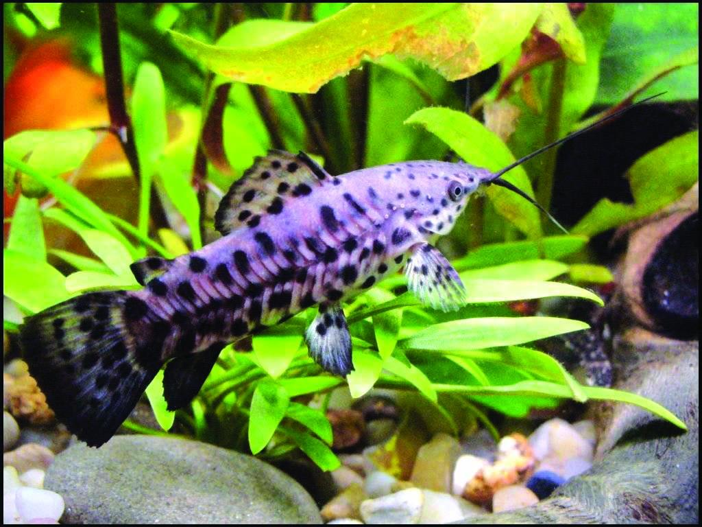 Таблица совместимости 44 аквариумных рыбок
