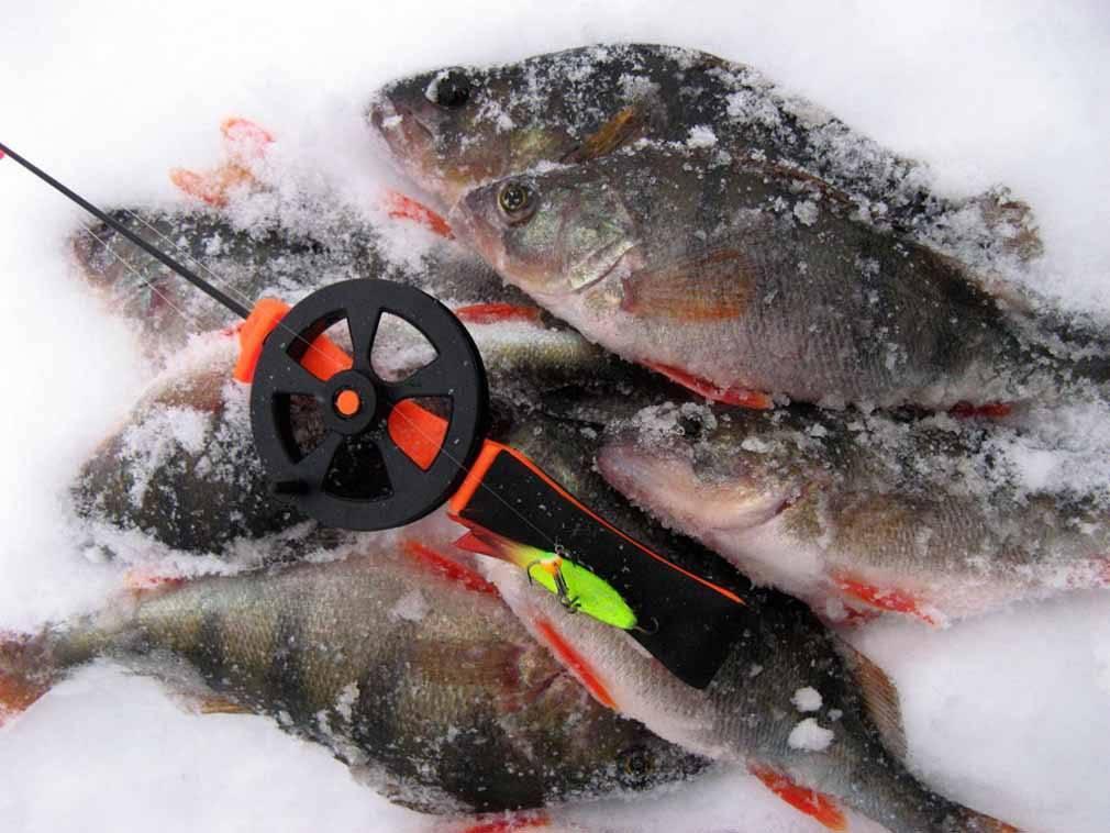 Зимняя рыбалка на окуня: снасти, приманки и места ловли [2019]
