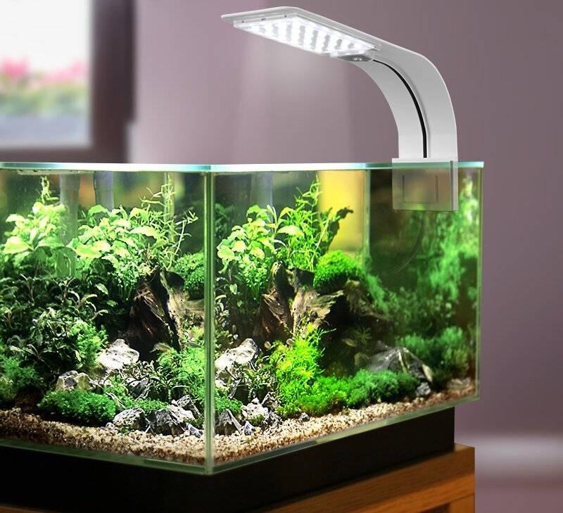 Лампы для аквариума - обзор лучших светильников по характеристикам, спектру, производителям и цене