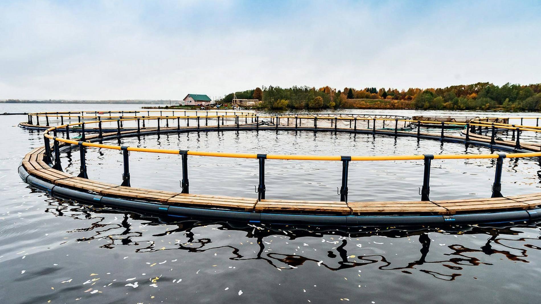 Березовский пруд — волоколамское шоссе, 78 км от мкад