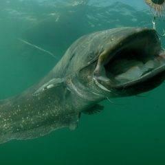 Растения и животные реки волги: подводные обитатели, какие из хищных и травоядных зверей обитают в лесах вдоль водоема