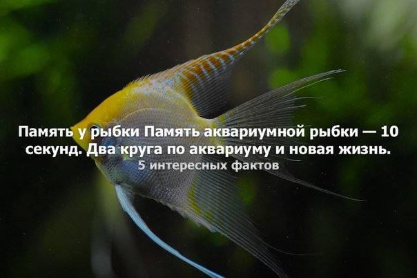 Память у рыб — сколько секунд длится, могут ли рыбы запоминать события