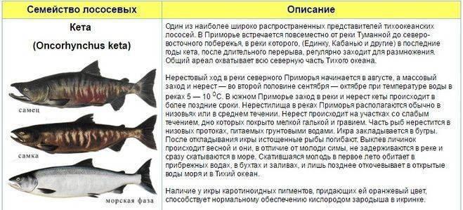Горбуша - рецепты