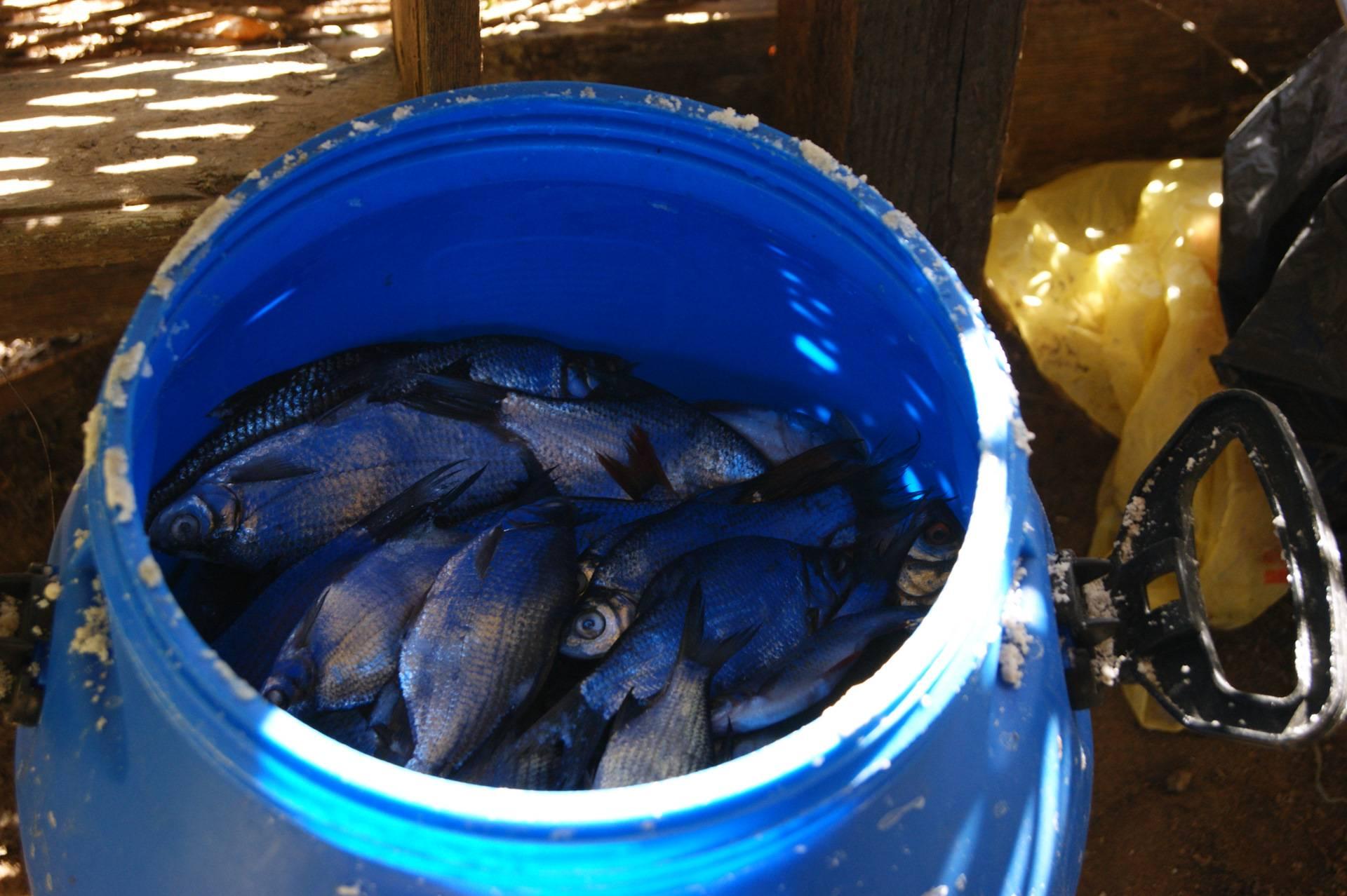 Особенности ловли хищных речных рыб