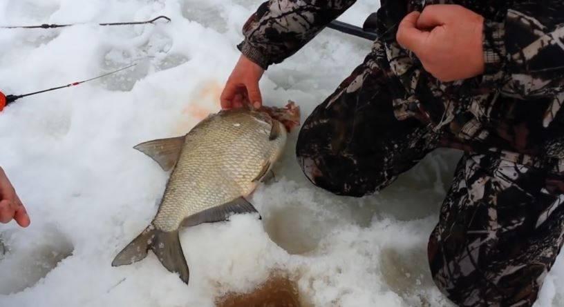 Как ловить леща зимой: различные монтажи оснастки, прикормка для подлёдной рыбалки | berlogakarelia.ru
