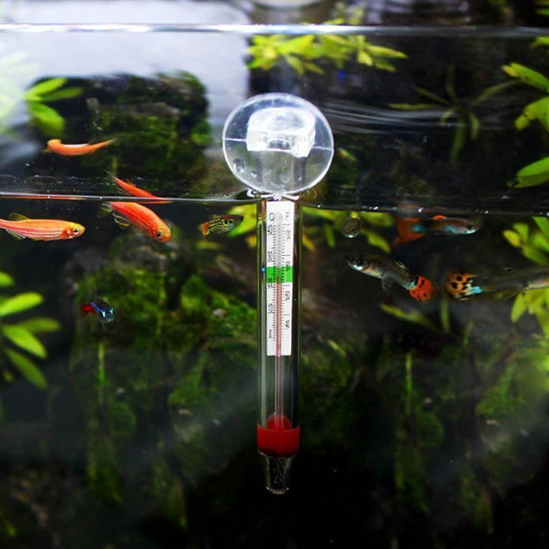 Температура воды в аквариуме для рыбок: каким должен быть оптимальный температурный режим