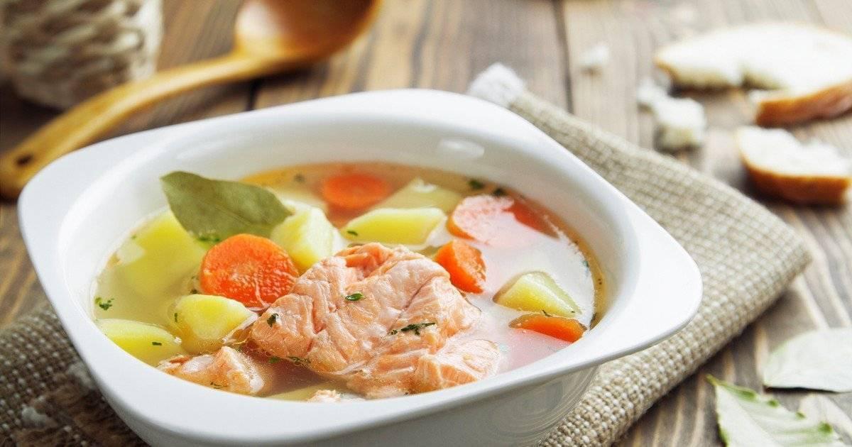 Рецепт: уха из семги — наваристая и душистая. уха из головы сёмги, калорийность, польза и вред рыбного супа