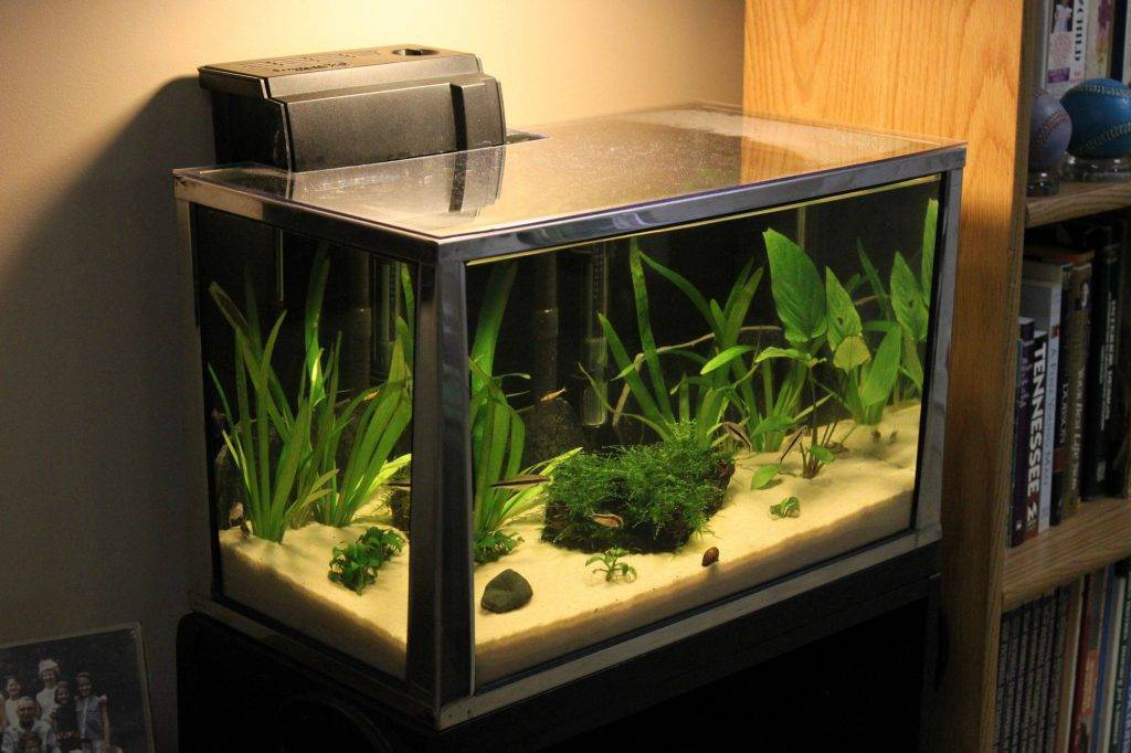 Как правильно выбрать аквариум для дома: их виды и аксессуары к ним