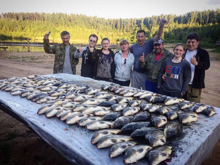 Рыбалка в одинцовском районе (раскаты, власово и другие рыболовные базы), какая рыба водится
