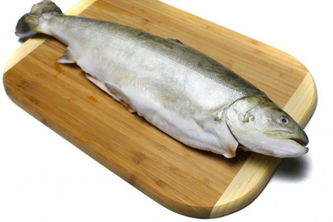 Полезные свойства гольца: 115 фото мяса и икры рыбы. места обитания и варианты приготовления