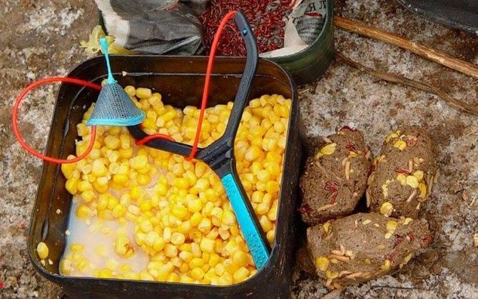 Горох для рыбалки на леща - рецепты для насадки и прикормки
