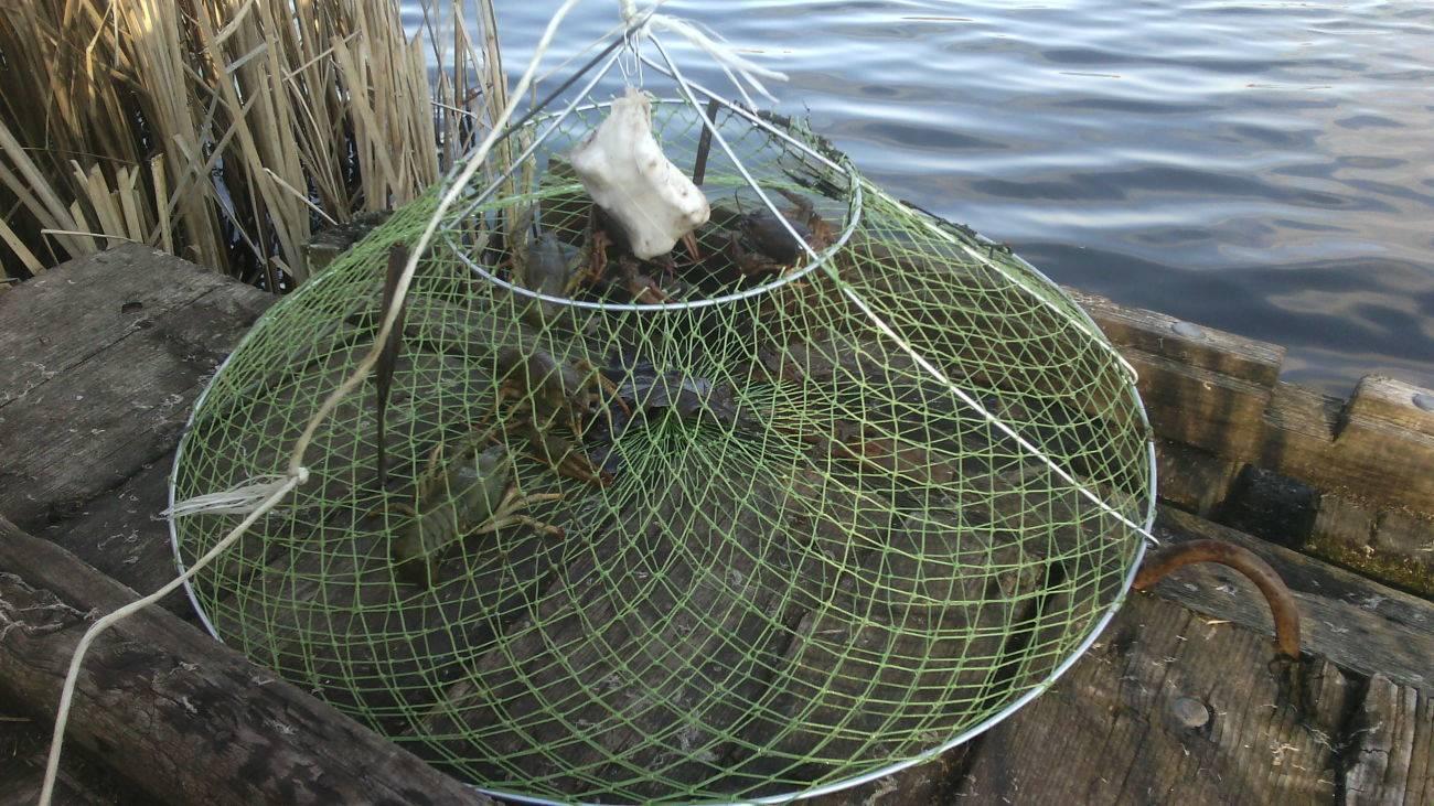 Эффективная ловля раков руками. как ловить на продажу или просто на рыбалке или на отдыхе.